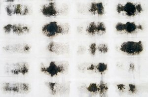 Toxic Mold Removal