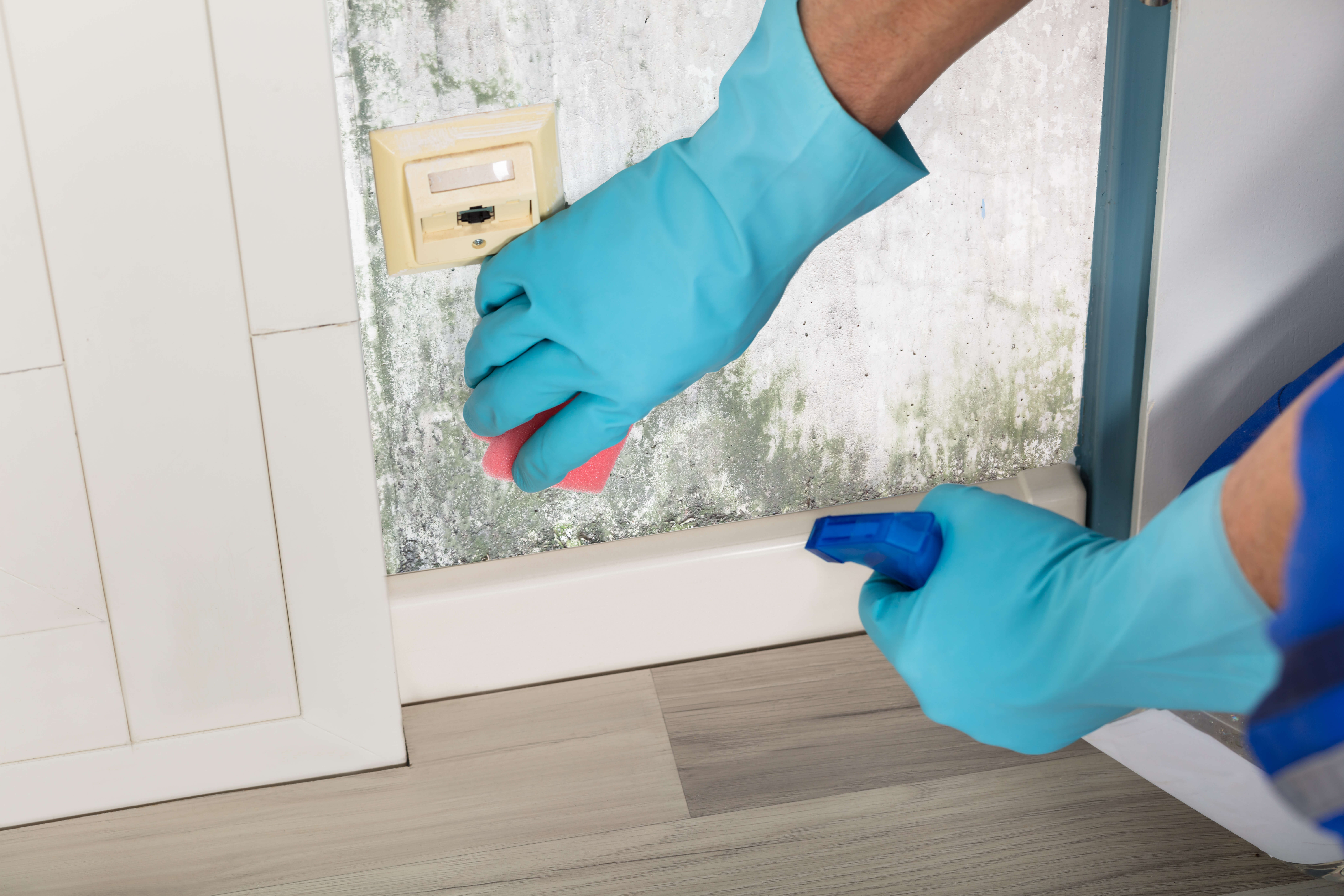 mold in your apartment