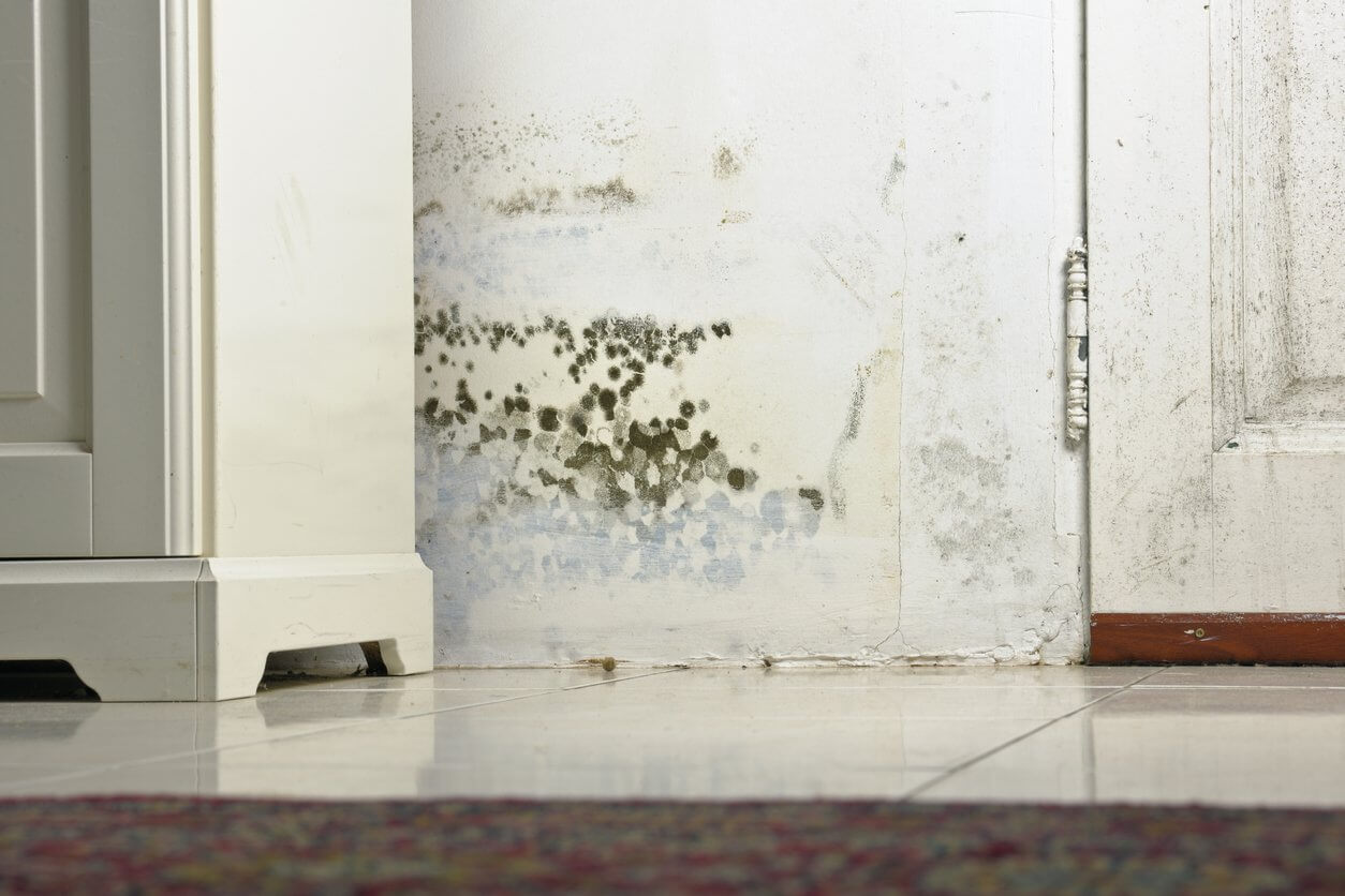 Water Damage Restoration Briny Breezes FL