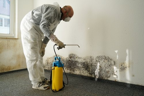 proper mold remediation