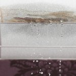 Mold Causes Structural Damage